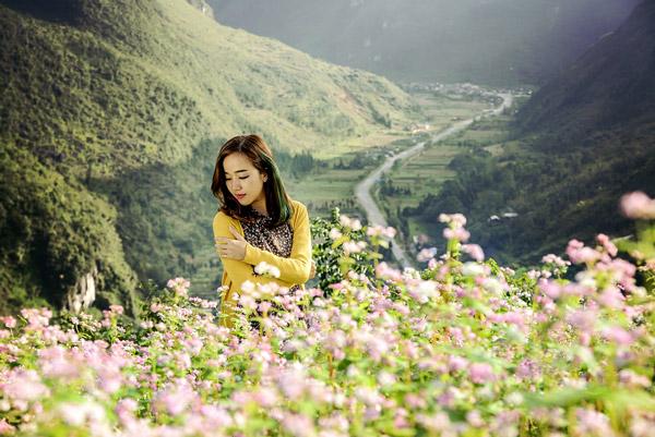 Mùa hoa tam giác mạch tháng 10 vùng trời Hà Giang