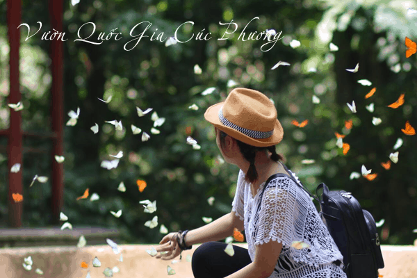 Butterfly season in May of Cuc Phuong forest