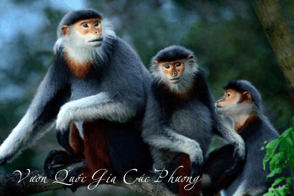 Nhiều loài động vật quý hiếm / Many rare and precious animals