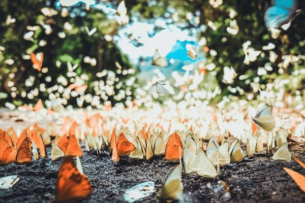 hàng vạn con bướm đủ màu sắc bay lượn trong nắng.