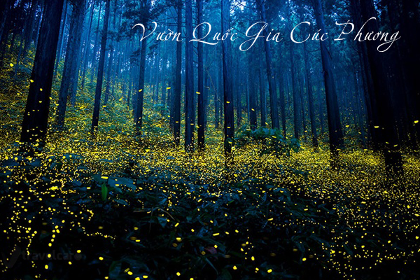 Fireflies shimmering fanciful in the forest